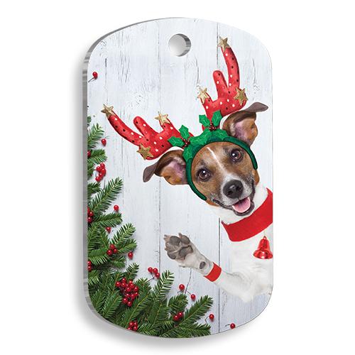 Hi Dog Asker Köpek Künyesi